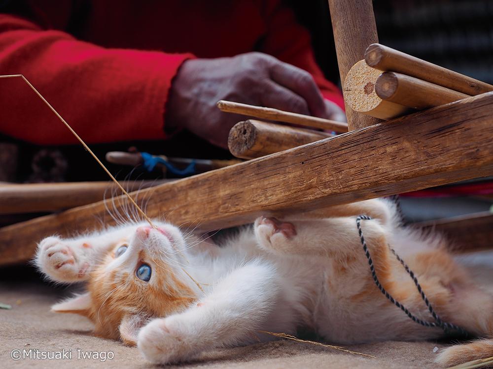 仰向けでヘソ天になる子猫の写真(ペルー・タキーレ) by 岩合光昭写真展&写真集「こねこ」