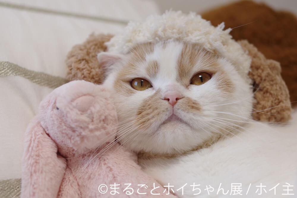 犬のニット帽「ホイッヌ」を被って正面を見つめる人気猫・ホイップ(ホイちゃん)