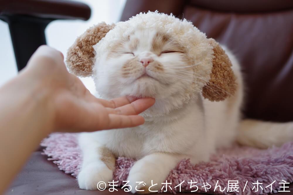 顎を撫でられて気持ちよさそうな人気猫・ホイップ(ホイちゃん)