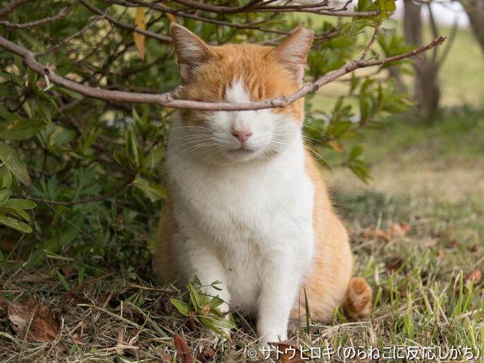 枝で目が隠れた猫 by サトウ ヒロキ(のらねこに反応しがち)