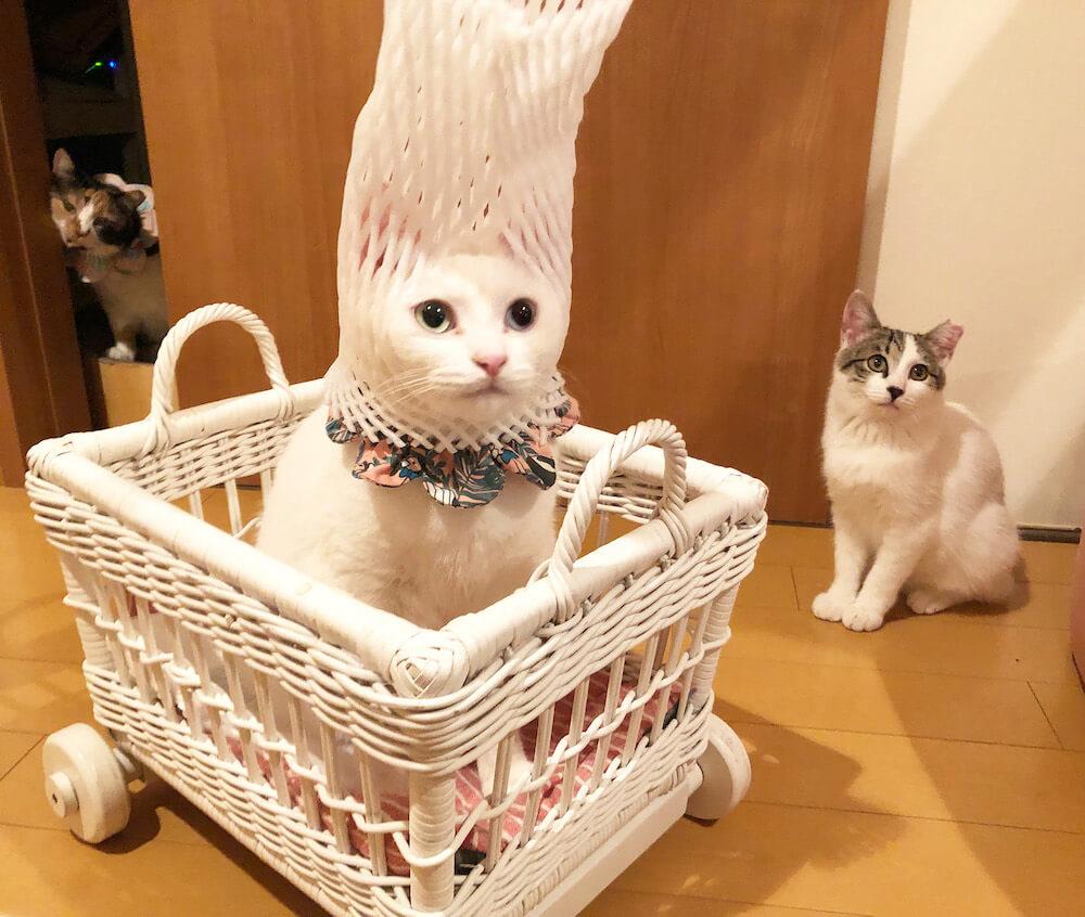 果物の包装を頭に被る猫 byMai Yamamoto