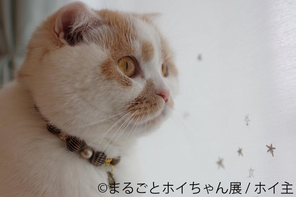 人気猫・ホイップ(ホイちゃん)の横顔