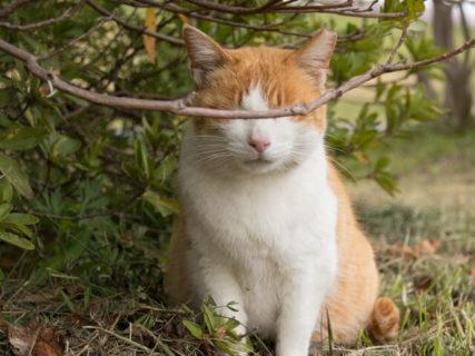 約400点のネコ写真を展示!猫の合同写真展「ねこ専」6/22から開催。一般公募も実施中