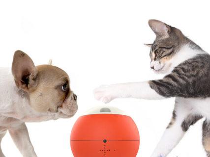 愛猫・愛犬が遊びたくなる機能が充実ニャ!球体型ロボット「easyPlay(イージープレイ)」