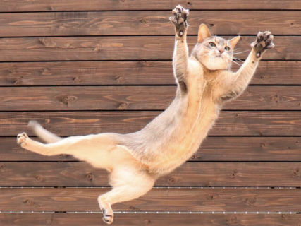 猫の新作写真800枚が大集合「ねこにすと展」6/15から有楽町で開催!人気投票の結果発表もあるにゃ