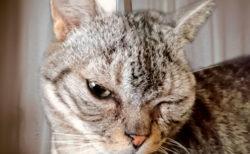 アイペット損保から「猫の名前ランキング2018」が発表!今回は猫種別の順位&キラキラネームもあるニャ