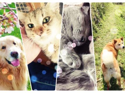 日本で初めて廃校を活用した犬猫保護シェルター「ティアハイム小学校」保護猫の受け入れ開始へ
