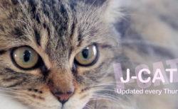 猫カフェの映像をお家でまったり楽しめる「にゃんくるTV」、6月20日からYouTubeで配信開始
