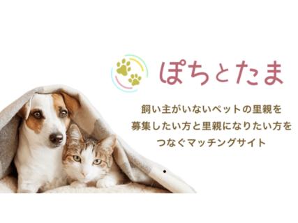 ミルクボランティアも募集できるニャ!犬猫の里親マッチングサービス「ぽちとたま」
