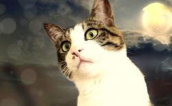 まだ間に合う!大阪・京都・神戸のネコ好きさん向け講座6選、服部幸獣医師の無料講座もあるニャ