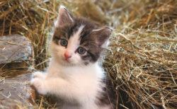 岩合さんが世界各地で出会った子猫たちの写真展「こねこ」のメインビジュアル