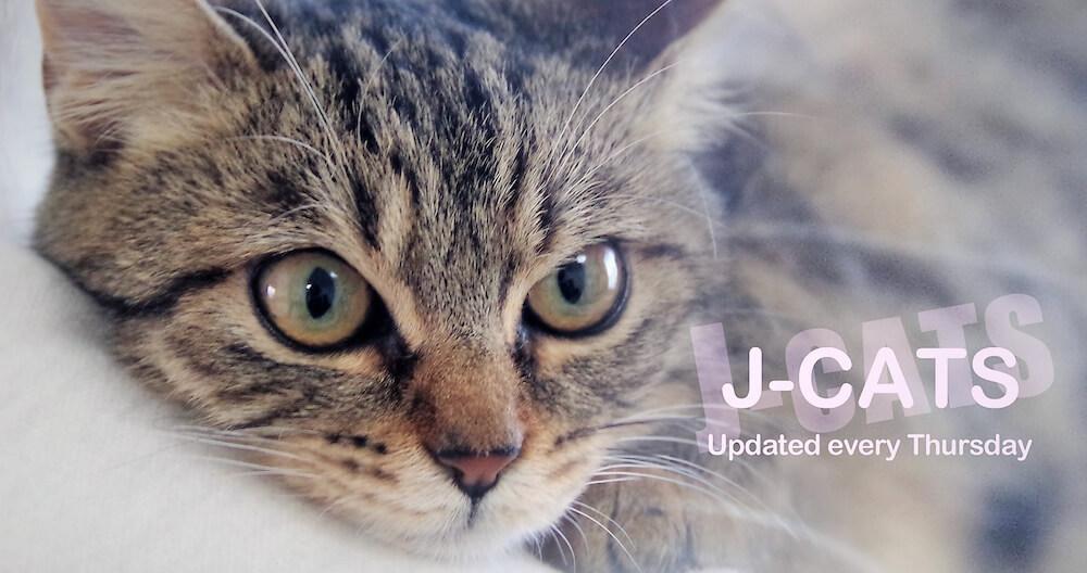 猫動画チャンネル「J-CATS」