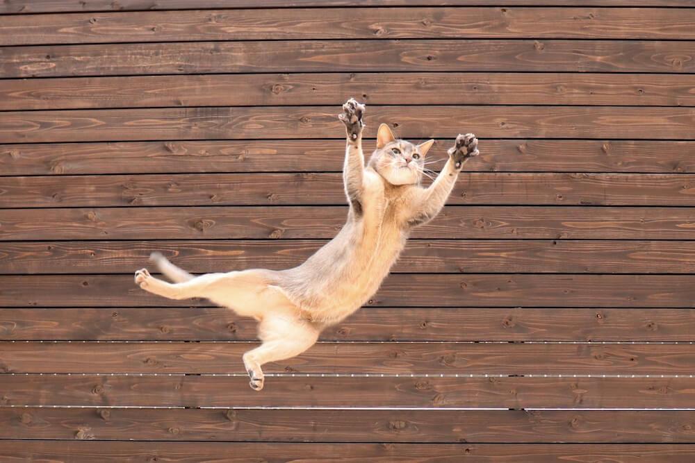 宙に舞う猫のスルメさん(@russiaby2)