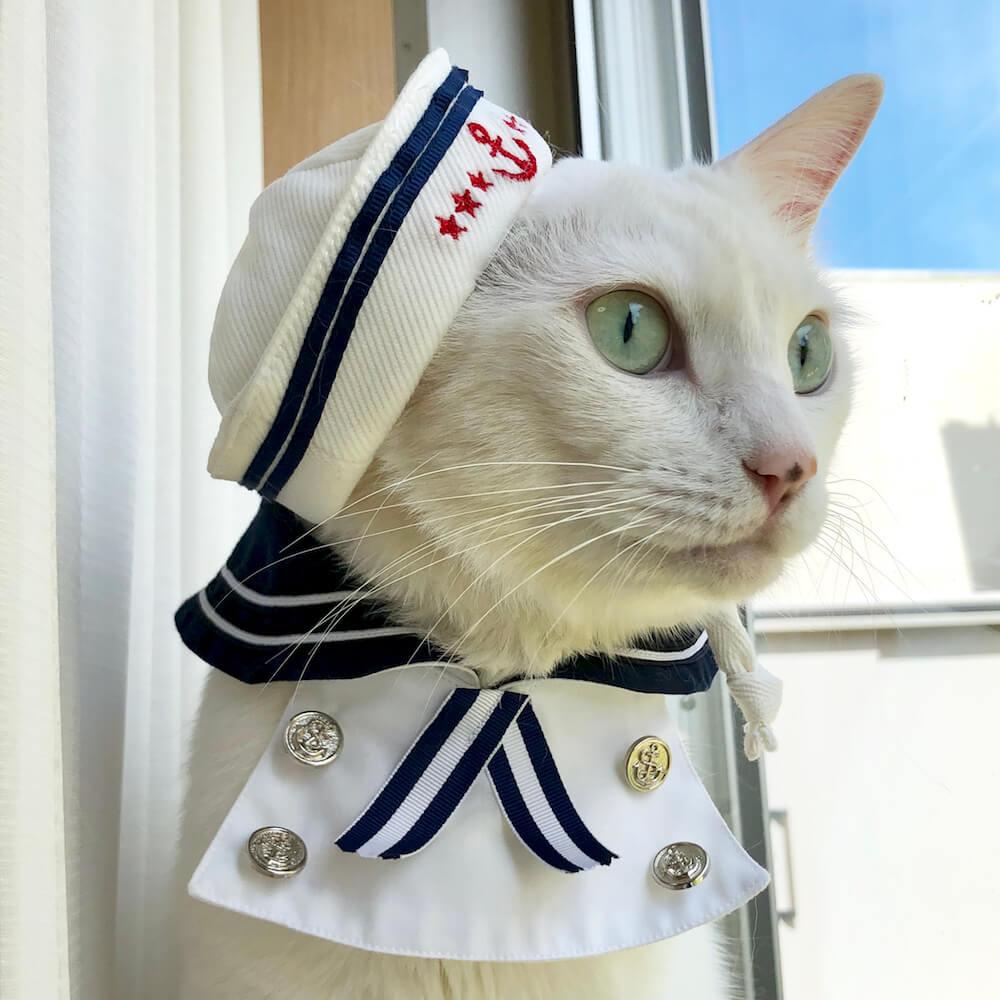 開閉さんのコスプレをする猫・アリア(@aria_shironeko)