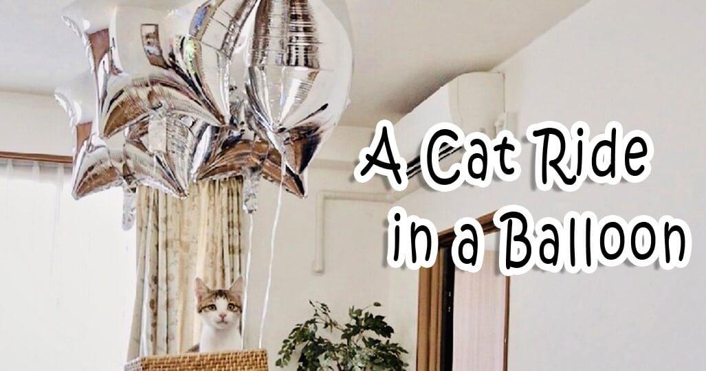 猫動画チャンネル「J-CATS」の配信ネコ動画