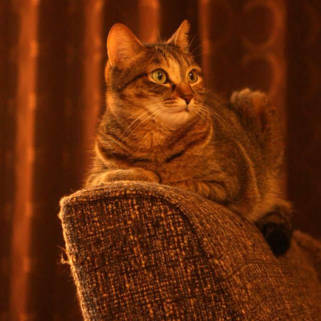 猫が爪をといで糸が解れたソファ