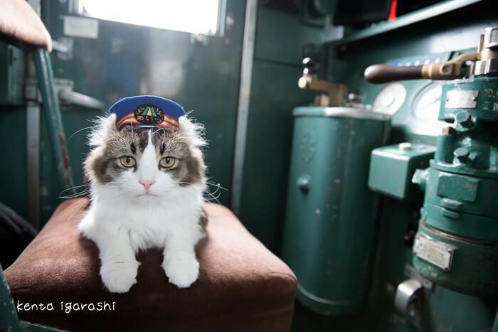 会津鉄道・芦ノ牧温泉駅の人気猫「らぶ駅長」