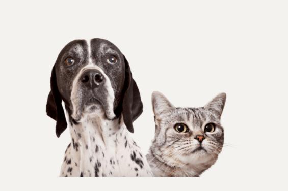 保護猫や保護犬をサポートできるAmazonの「動物保護施設 支援プログラム」