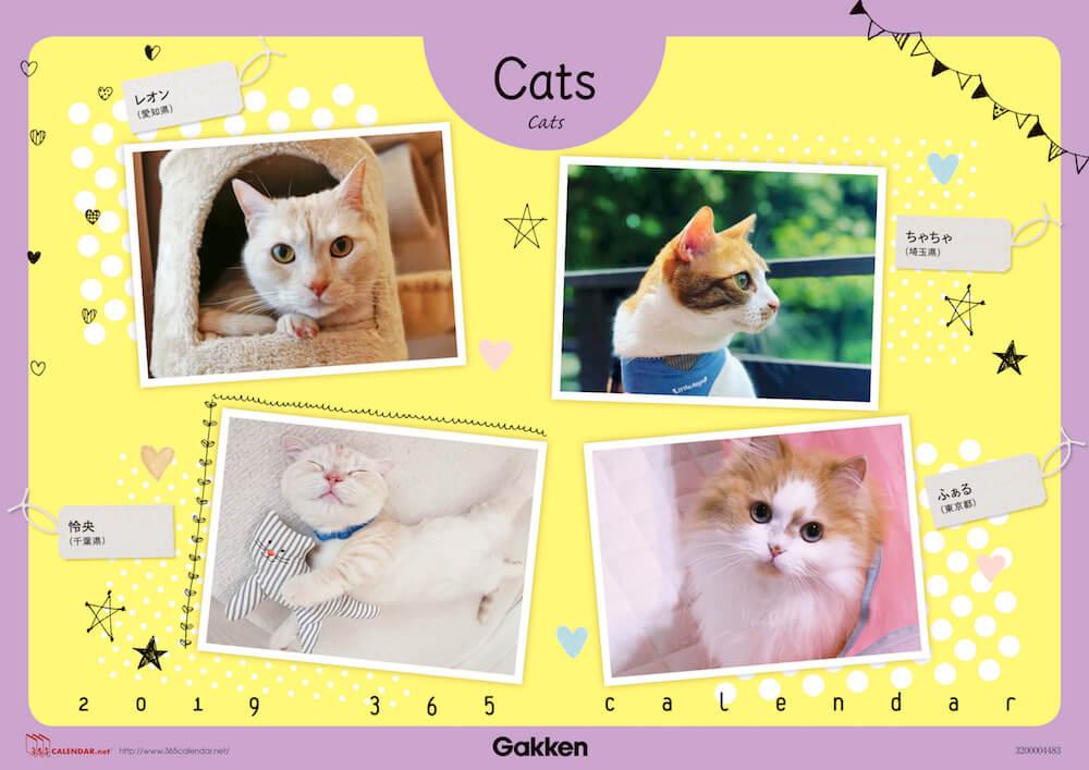 猫の「365(サンロクゴ)カレンダー」表紙イメージ