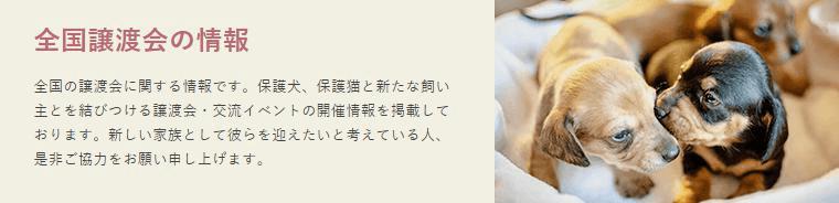犬猫の譲渡会情報 by「ぽちとたま」