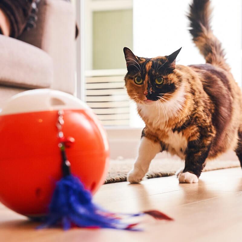 ペット用の球体型おもちゃ「easyPlay(イージープレイ)」を見つめる猫