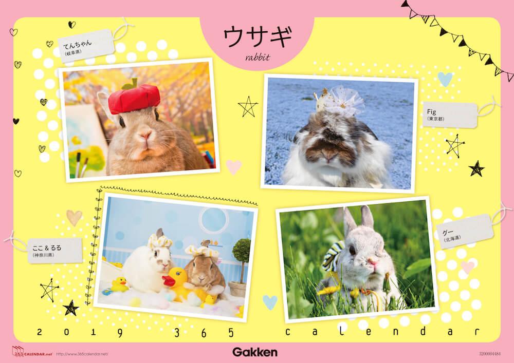 うさぎの「365(サンロクゴ)カレンダー」表紙イメージ