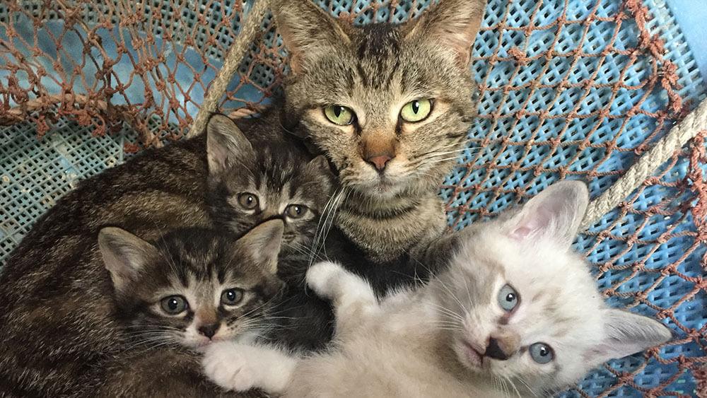 ダーウィンが来た!ネコ特集第3弾に登場する、主人公で女王ネコの「コガネ」とその子猫たち