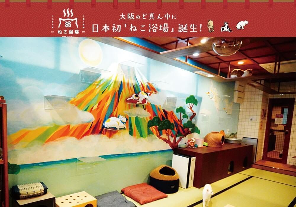 大阪・心斎橋の猫カフェ「ねこ浴場」のメインビジュアル