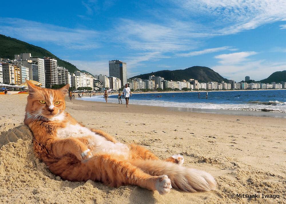 ブラジル・リオデジャネイロ南東部のコパカバーナビーチでモテモテの人気ネコ「シキンニョ」by 岩合光昭の世界ネコ歩き2