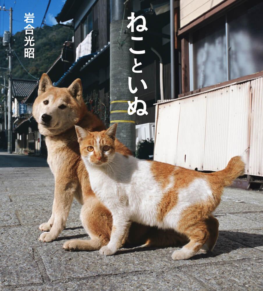 岩合光昭写真展&写真集「ねこといぬ 」メインビジュアル