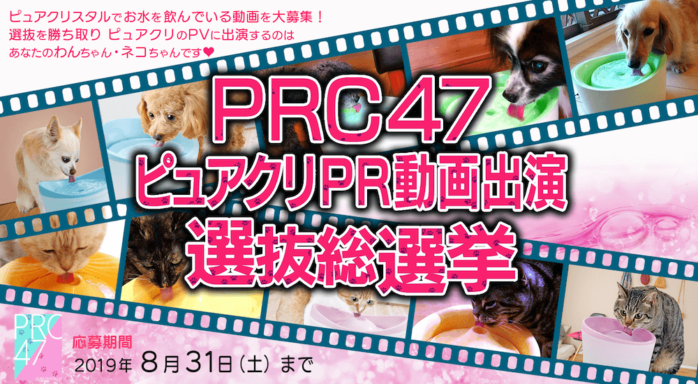 PRC47ピュアクリPR動画出演選抜総選挙のメインビジュアル