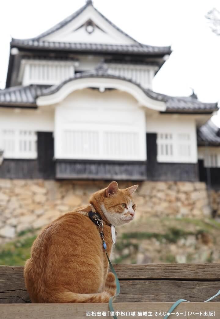 備中松山城の猫城主「さんじゅーろー」