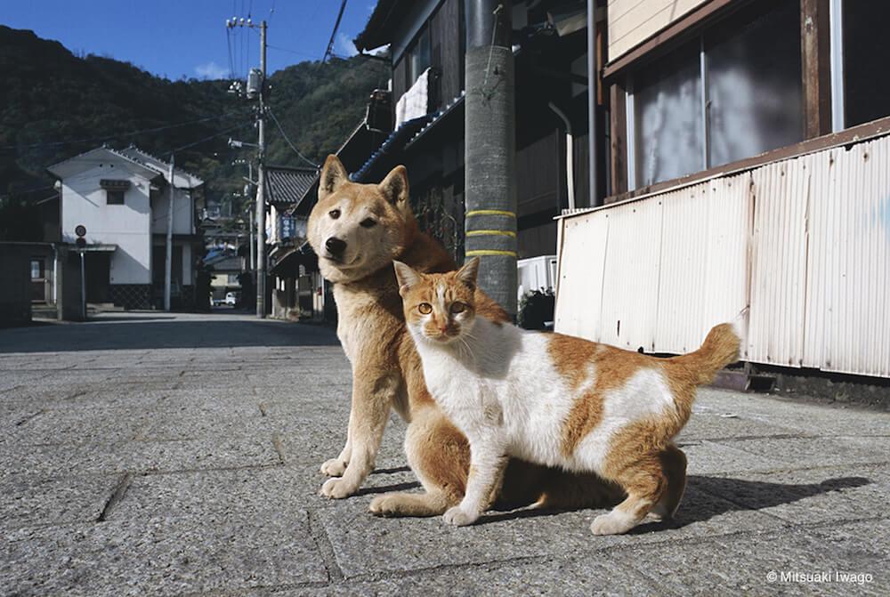 一緒に仲良く振り返る柴犬と茶白猫 by 岩合光昭