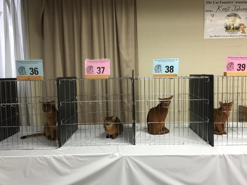 ケージの中で審査を待つ猫たち by CFAのキャットショー会場