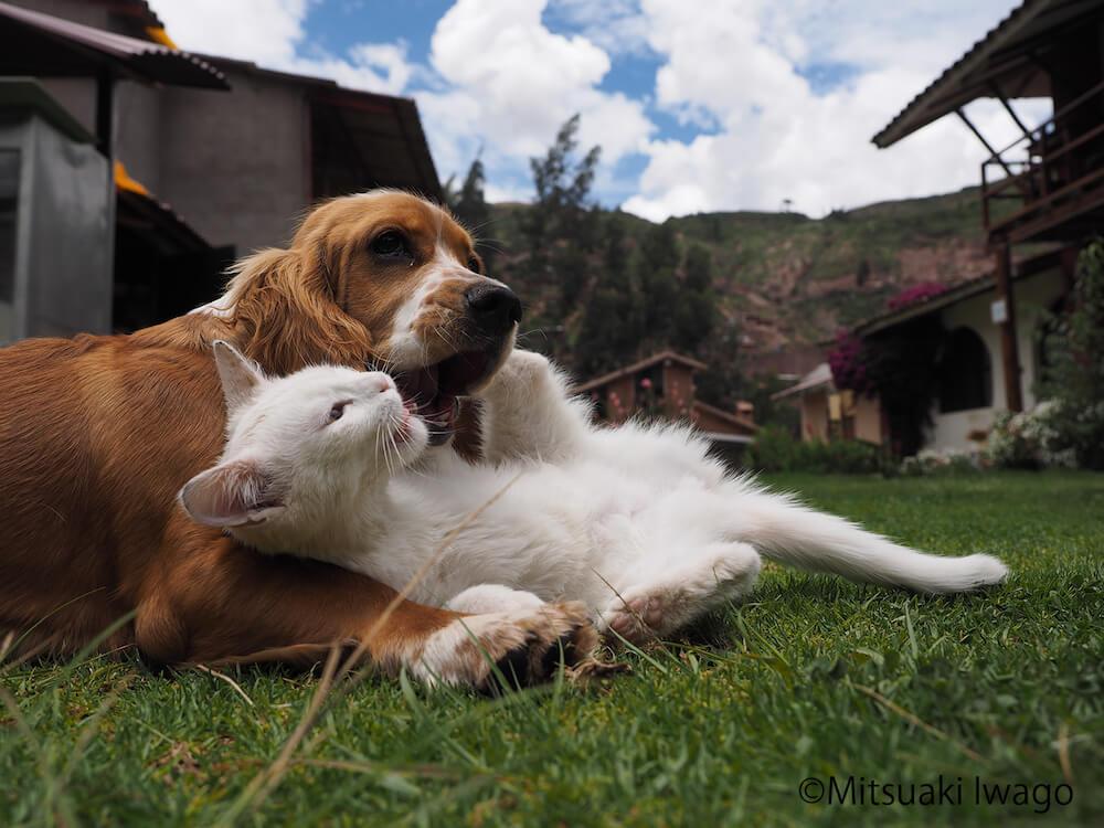 仲良くじゃれ合う犬と猫 by 岩合光昭