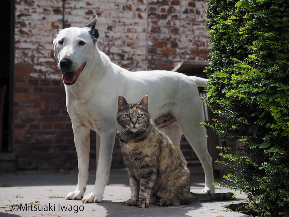 仲良く並んで佇む犬と猫 by 岩合光昭