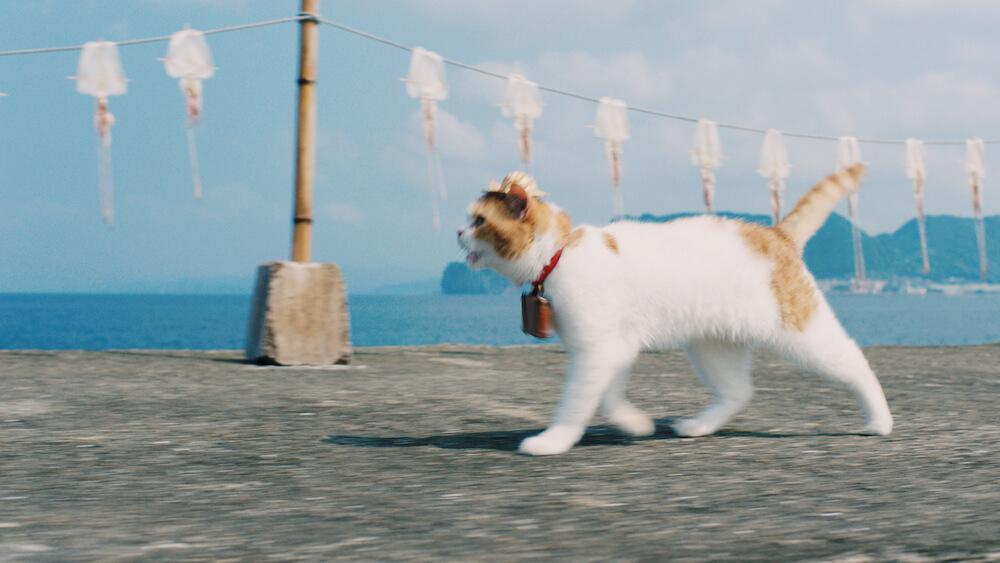 イカが干された海岸線を歩く「にゃらん」 by じゃらんのCM「幸せな旅」篇(15秒)