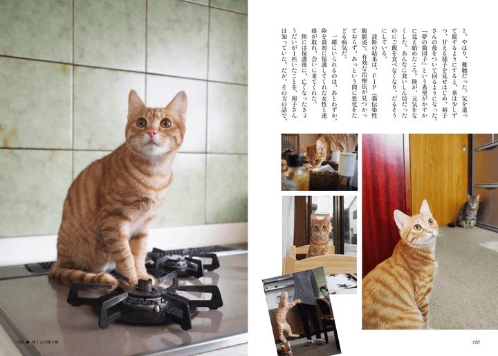 書籍「寄りそう猫」のエピソード15、陸くんの贈り物