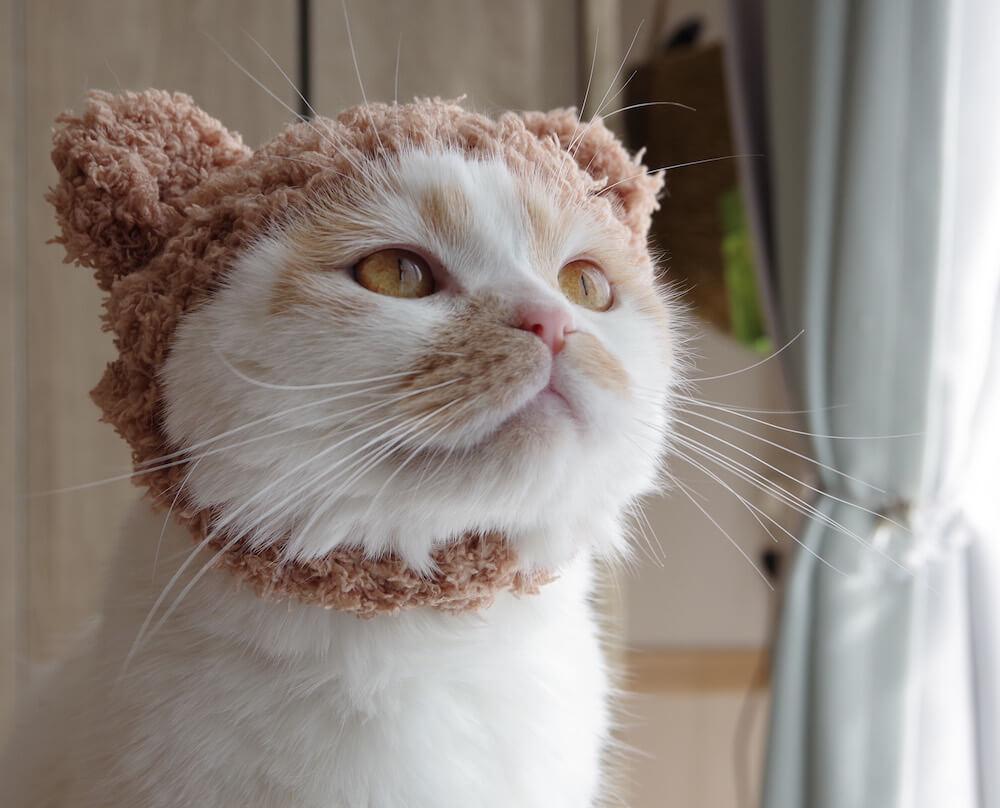 ニット帽を被るちくわ柄の人気猫・ホイップ