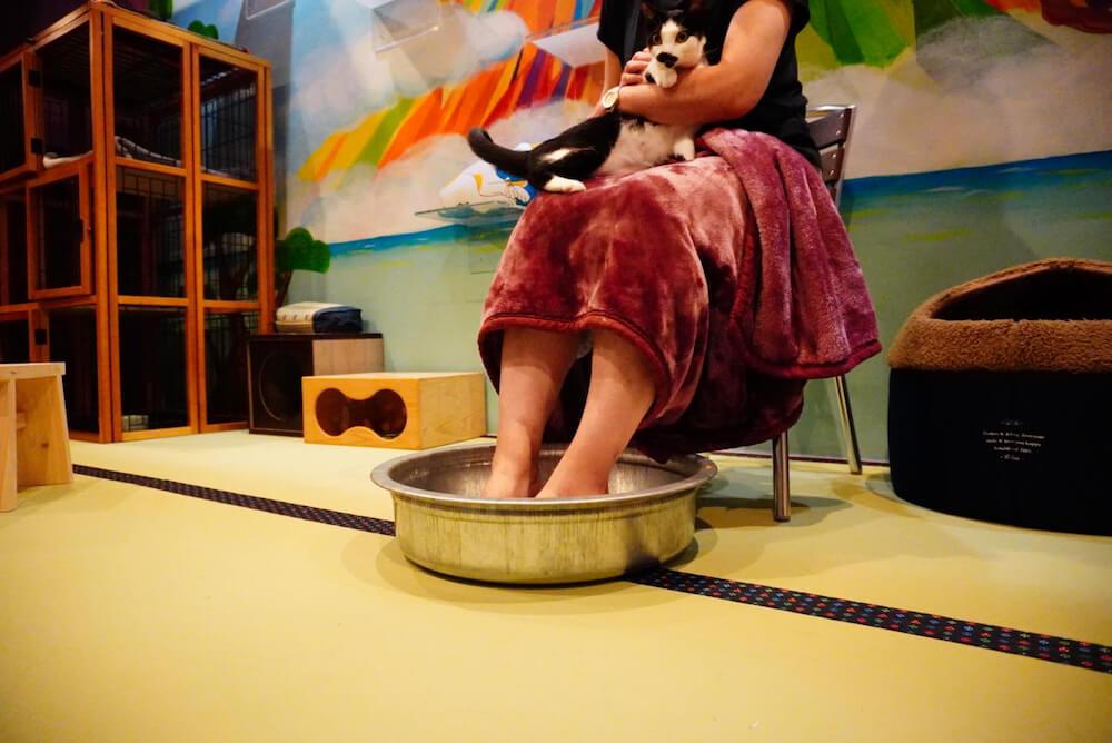 猫カフェ「ねこ浴場」のオプション、本格的な足湯サービスのイメージ