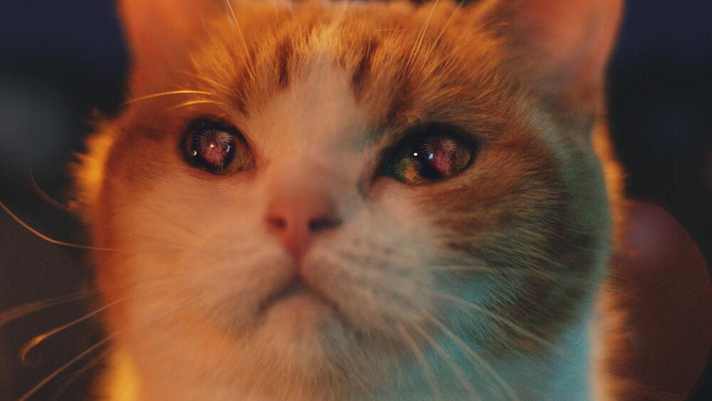 瞳に大輪の花火が映り込んでいる「にゃらん」 by じゃらんのCM「幸せな旅」篇(15秒)