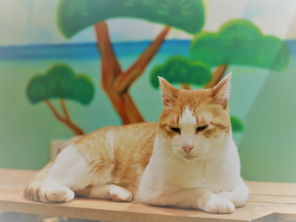 猫カフェ「ねこ浴場」にいる保護猫
