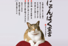 猫による上から目線なテレビCM「にゃんぱく宣言」が7月から放送開始!作詞作曲さだまさし