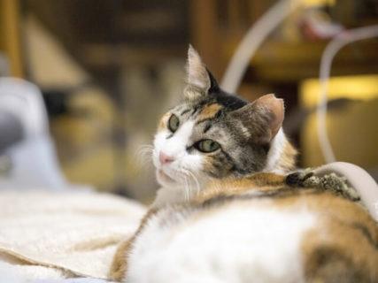 専門獣医師によるセミナー、腸内フローラという武器で挑む犬猫のアレルギー皮膚疾患