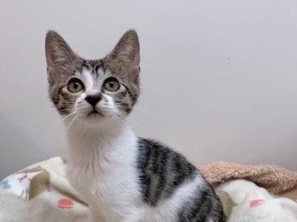 首輪を見れば抱っこ好きな猫が分かる!猫カフェ「コックンの別荘」が保護猫の里親募集をスタート