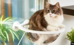 猫のお腹や肉球が透けて見える魅惑の「キャットクリアカプセル」など、新着のネコ用品7選