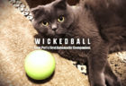 自動で動いて猫の遊び相手になってくれる!ペット用の玩具Wicked Ball(ウィキッドボール)