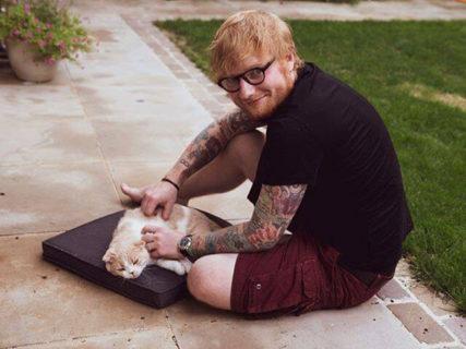 猫好きミュージシャン、エド・シーランのアルバム発売記念!保護猫支援に繋がるキャンペーンを開始