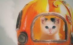 アトリエイエネコのプロカメラマン、KARAさんによる猫写真