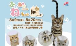 世界中の珍しい猫が集まる「ふれあい ねこ展」大分で8/9から開催!チケットが当たる総選挙も実施中